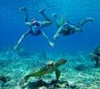 Schnorcheln mit Schildkröte