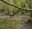 Mangrovensümpfe im Nationalpark