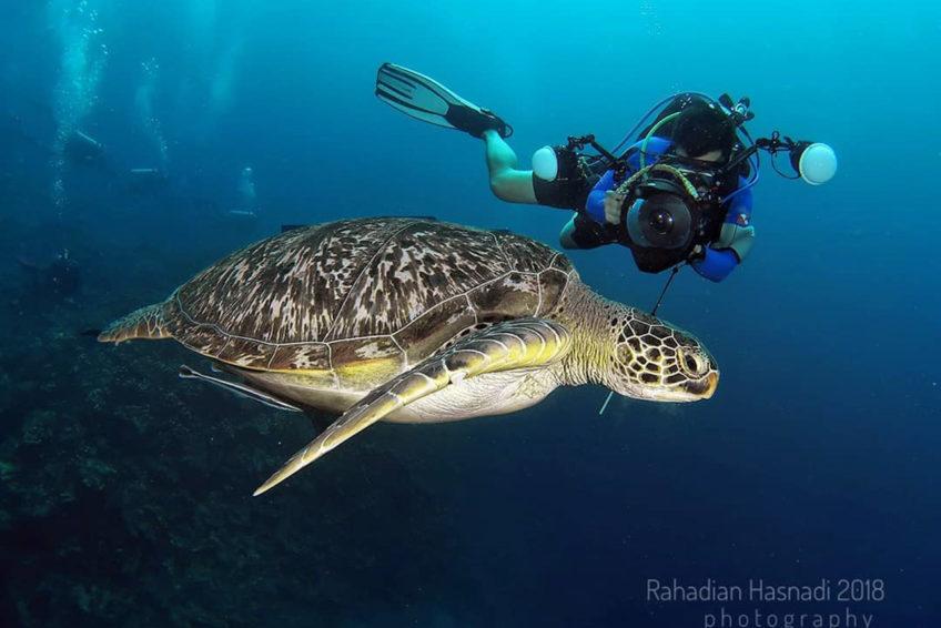 dolphin-dive-school-lombok-1