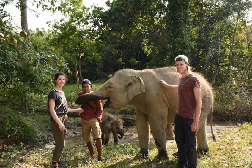 Barumun Nagari Wildlife Sanctuary Elefant 2