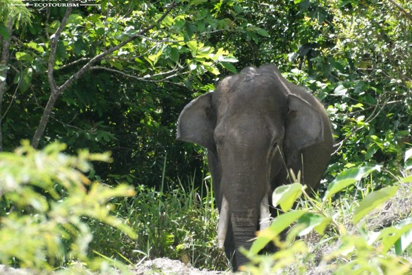 Barumun Nagari Wildlife Sanctuary elefant
