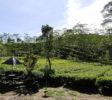 Nglinggo Tee-Plantage-yogyakarta