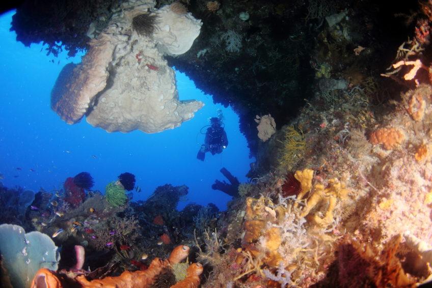 Araya Dive Resort-17