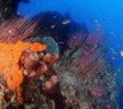 Araya Dive Resort-5