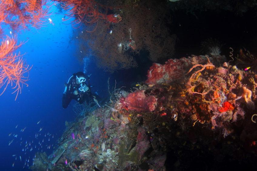 Araya Dive Resort-7