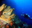 Araya Dive Resort-8