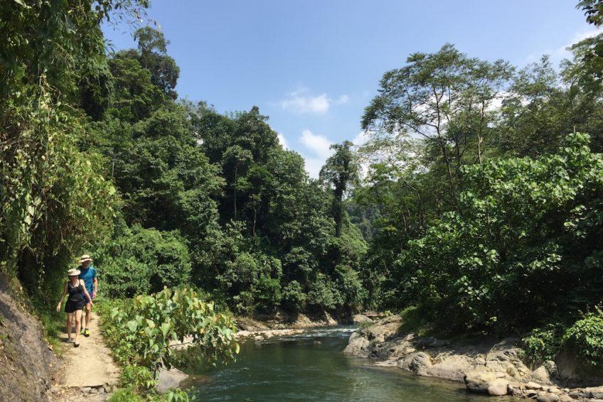 Dschungel_um_Bukit_Lawang