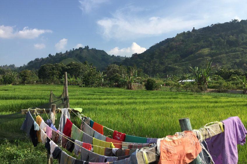 Reisfelder_Sumatra
