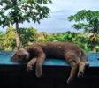 Balila Beach Resort Katze