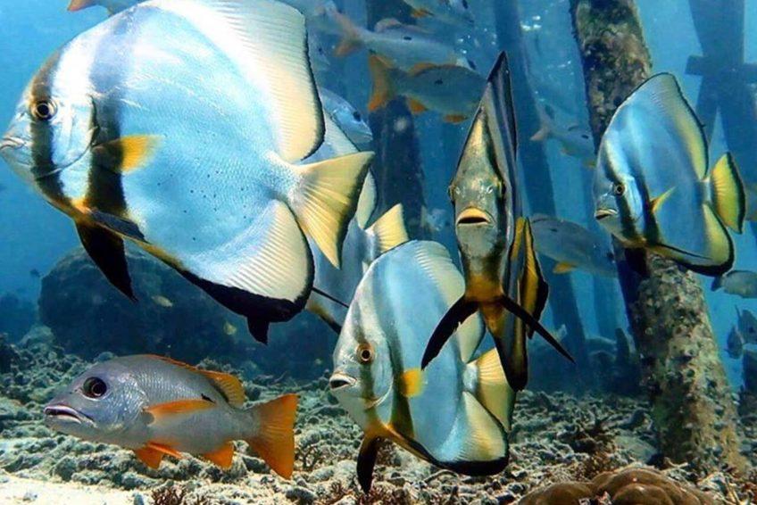 Soul Scuba Divers 11