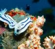 Soul Scuba Divers 19