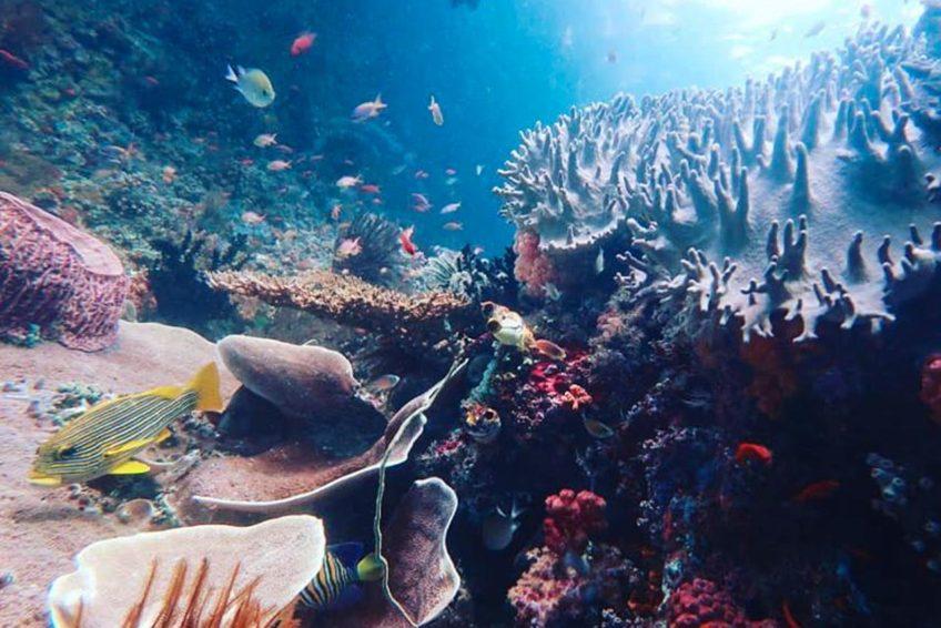 Soul Scuba Divers 25