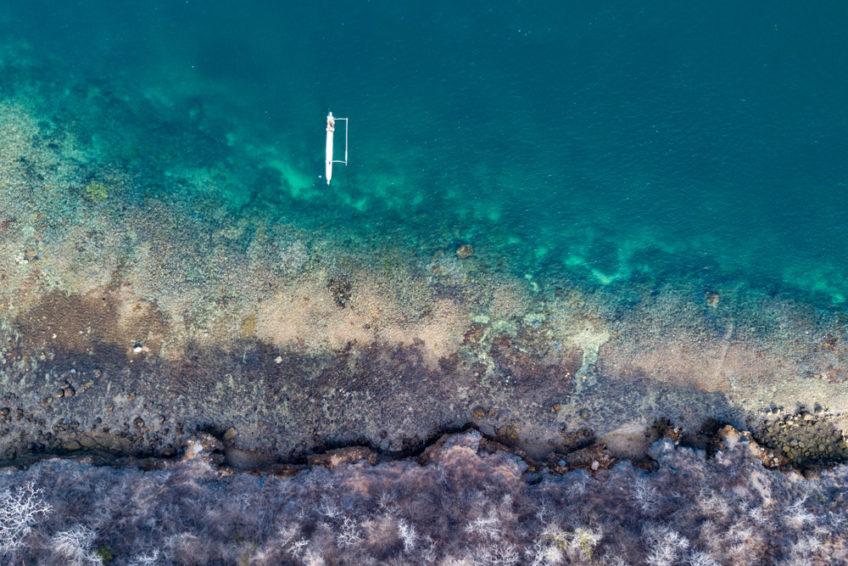 lombok-blue-marlin-20