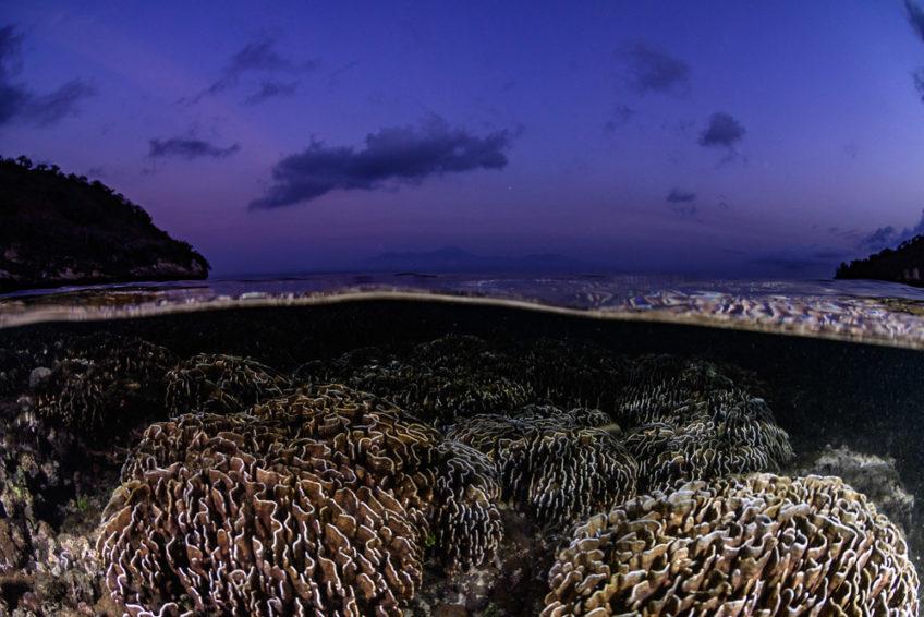 lombok-blue-marlin-28