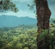 bukit-lawang-trekking-31